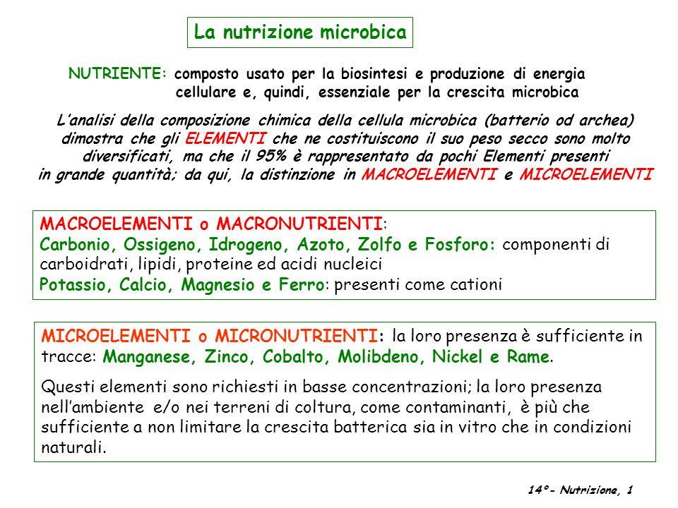 La nutrizione microbica