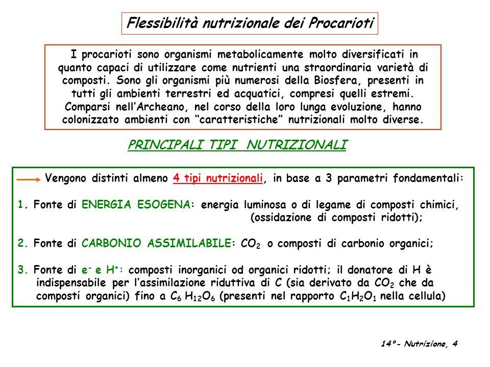Flessibilità nutrizionale dei Procarioti