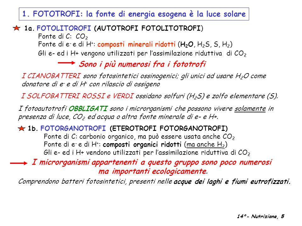 1. FOTOTROFI: la fonte di energia esogena è la luce solare