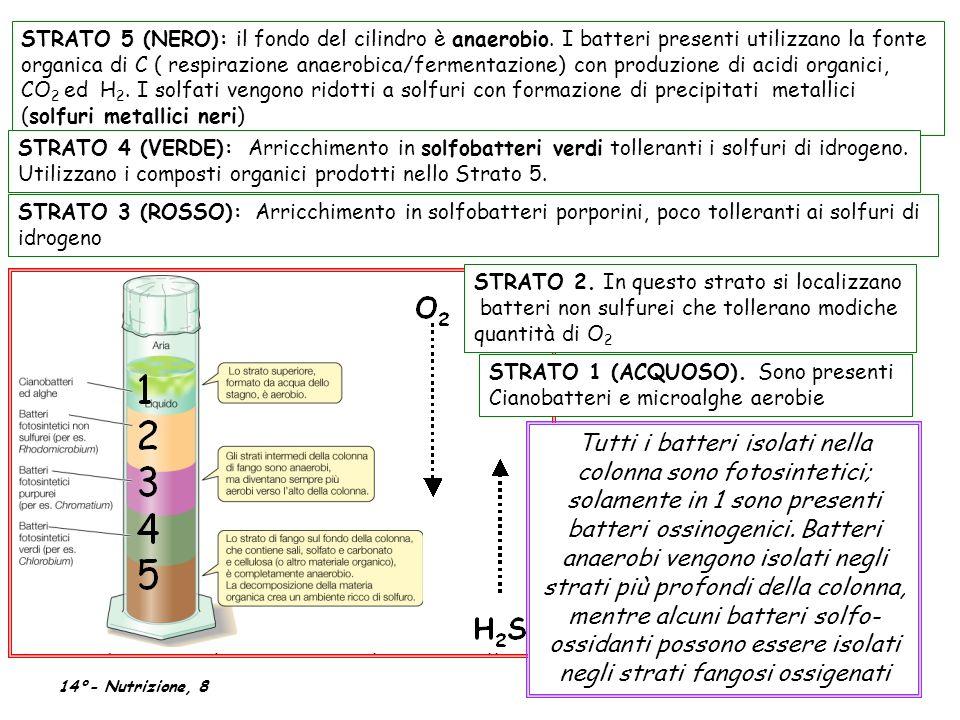 STRATO 5 (NERO): il fondo del cilindro è anaerobio