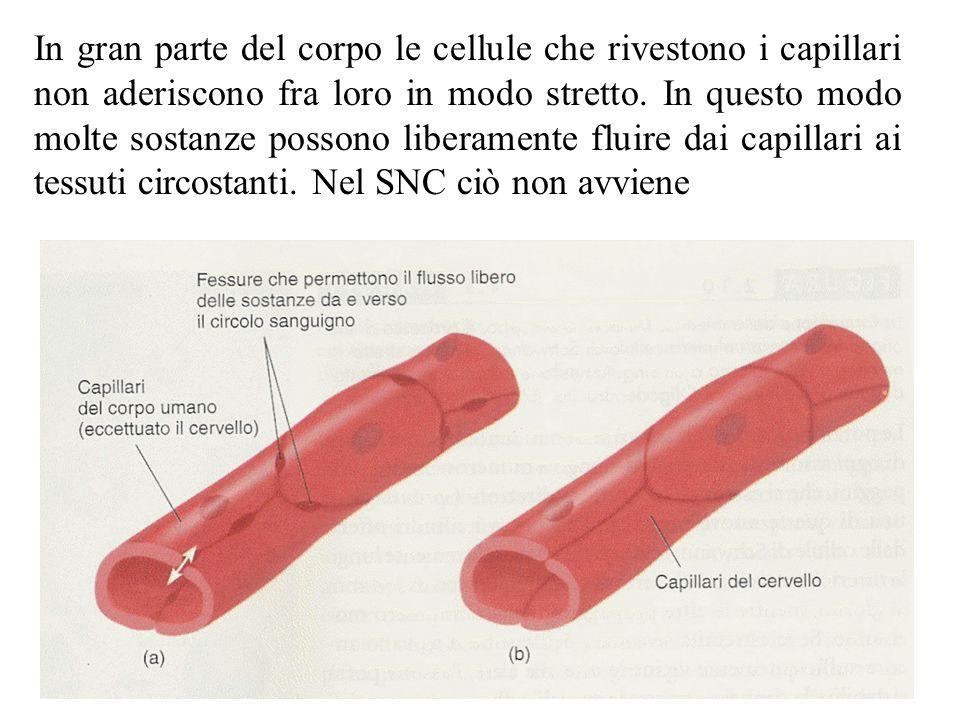 In gran parte del corpo le cellule che rivestono i capillari non aderiscono fra loro in modo stretto.