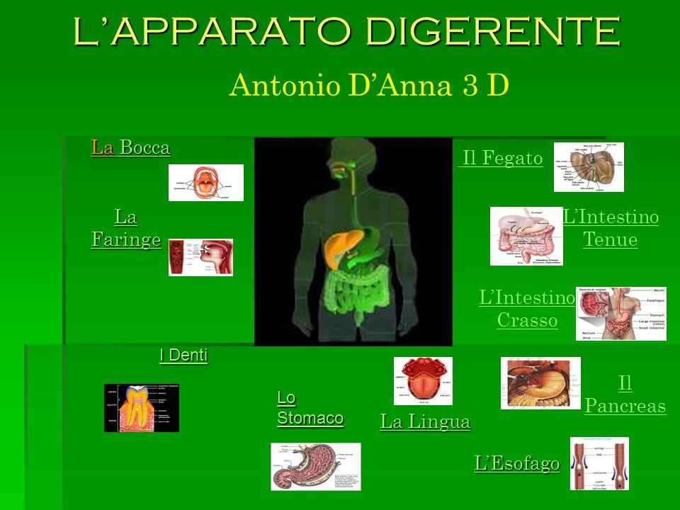 L'APPARATO DIGERENTE Antonio D'Anna 3 D La Bocca Il Fegato La Faringe