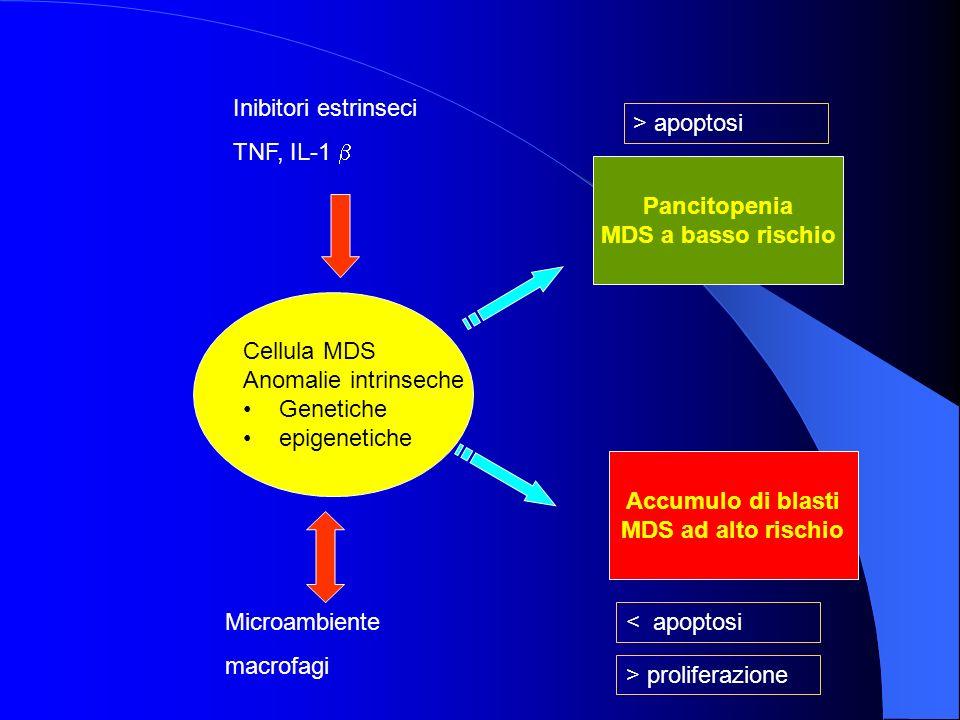 Inibitori estrinseci TNF, IL-1 b. > apoptosi. Pancitopenia. MDS a basso rischio. Cellula MDS. Anomalie intrinseche.