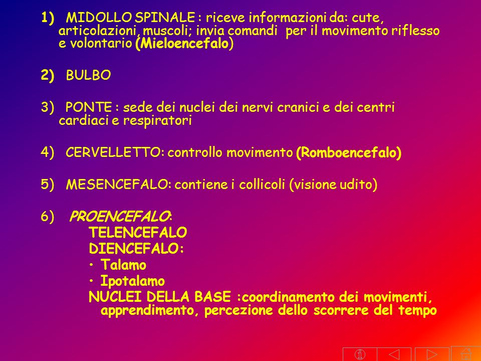 1) MIDOLLO SPINALE : riceve informazioni da: cute, articolazioni, muscoli; invia comandi per il movimento riflesso e volontario (Mieloencefalo)