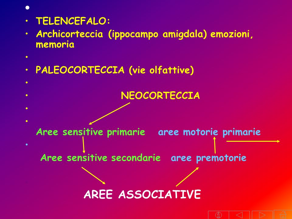 TELENCEFALO: Archicorteccia (ippocampo amigdala) emozioni, memoria