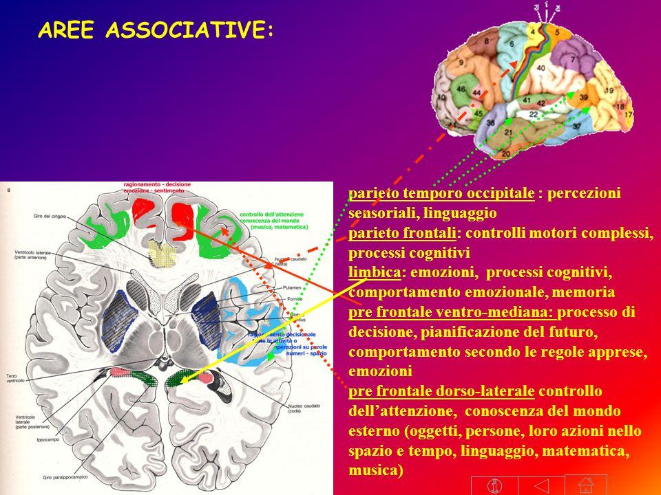 AREE ASSOCIATIVE: parieto temporo occipitale : percezioni sensoriali, linguaggio. parieto frontali: controlli motori complessi, processi cognitivi.