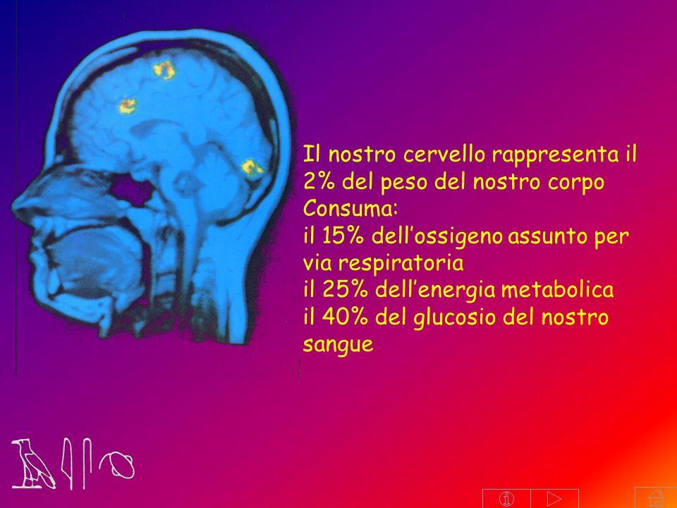 Il nostro cervello rappresenta il 2% del peso del nostro corpo