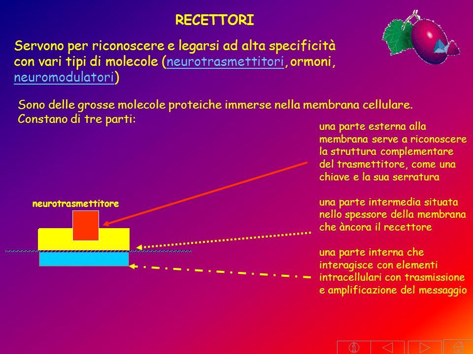 RECETTORI Servono per riconoscere e legarsi ad alta specificità con vari tipi di molecole (neurotrasmettitori, ormoni, neuromodulatori)
