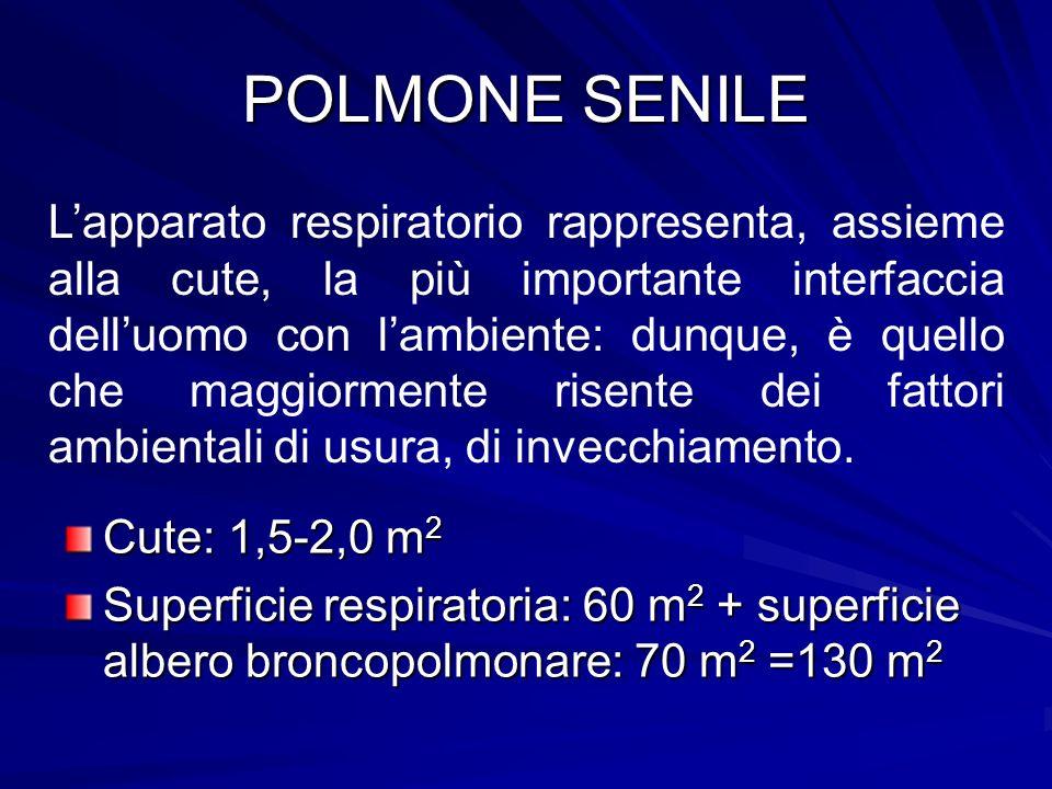 POLMONE SENILE