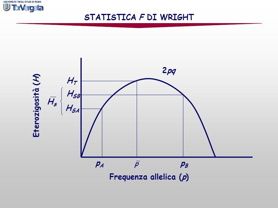STATISTICA F DI WRIGHT 2pq HT HSB Eterozigosità (H) HSA pA pB Frequenza allelica (p)