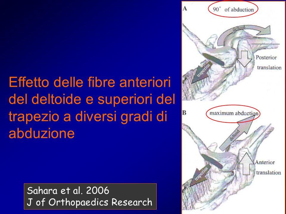Effetto delle fibre anteriori del deltoide e superiori del trapezio a diversi gradi di abduzione