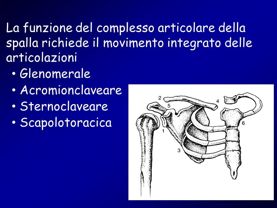 La funzione del complesso articolare della spalla richiede il movimento integrato delle articolazioni