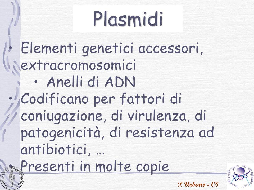 Plasmidi Elementi genetici accessori, extracromosomici Anelli di ADN