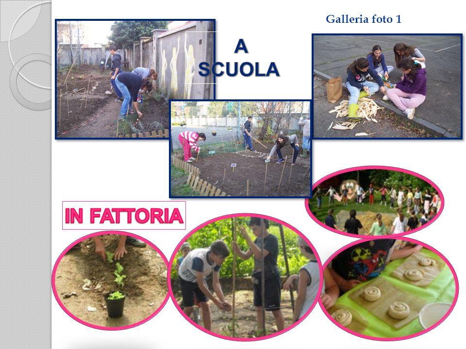 Galleria foto 1 A SCUOLA IN FATTORIA
