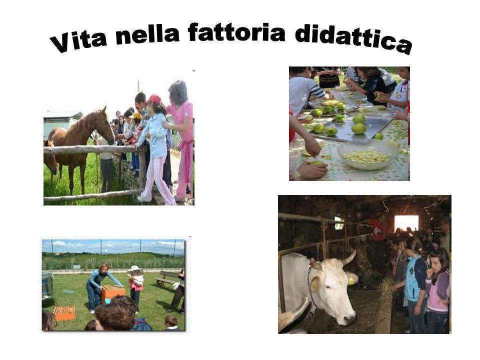 Vita nella fattoria didattica