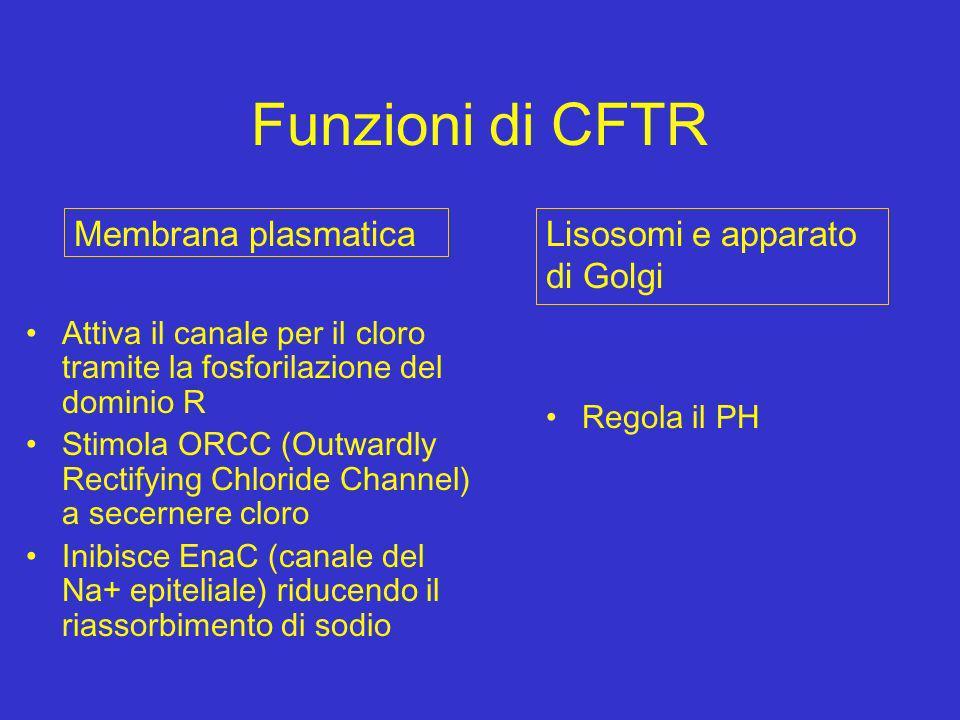 Funzioni di CFTR Membrana plasmatica Lisosomi e apparato di Golgi