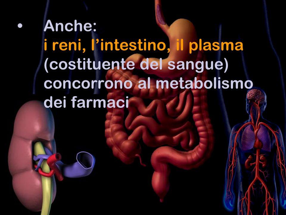 Anche: i reni, l'intestino, il plasma (costituente del sangue) concorrono al metabolismo dei farmaci