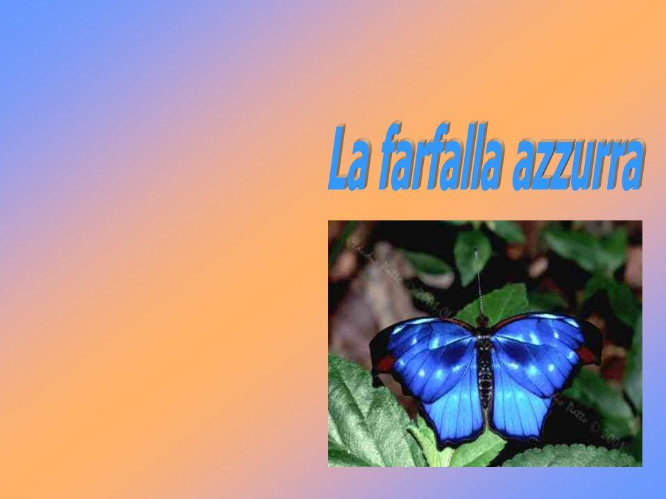 La farfalla azzurra
