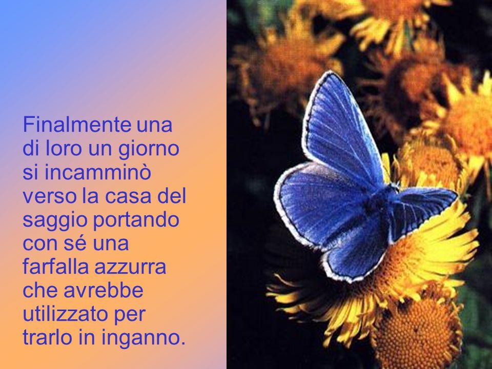 Finalmente una di loro un giorno si incamminò verso la casa del saggio portando con sé una farfalla azzurra che avrebbe utilizzato per trarlo in inganno.