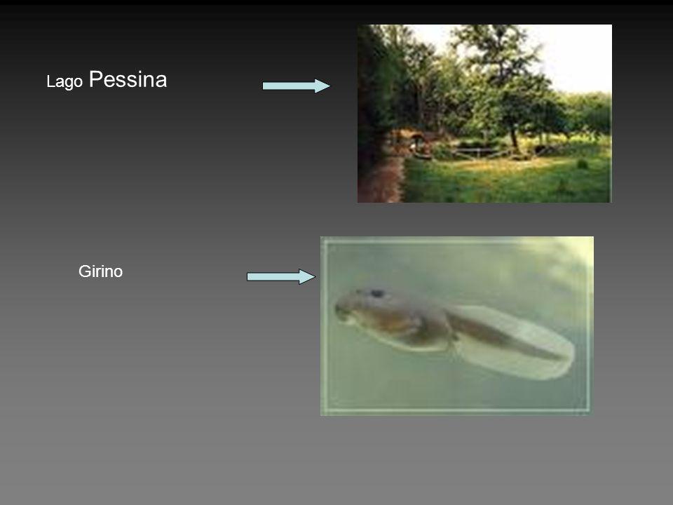 Lago Pessina Girino