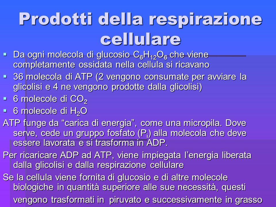 Prodotti della respirazione cellulare