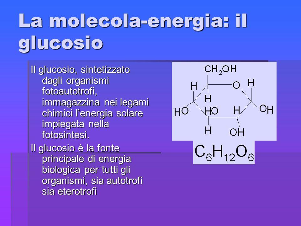 La molecola-energia: il glucosio