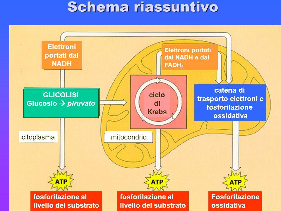 Schema riassuntivo Elettroni portati dal NADH GLICOLISI