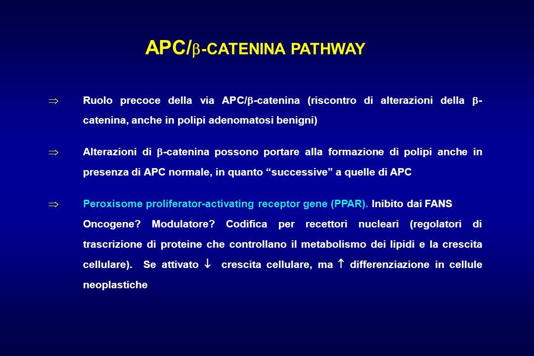 APC/-CATENINA PATHWAY