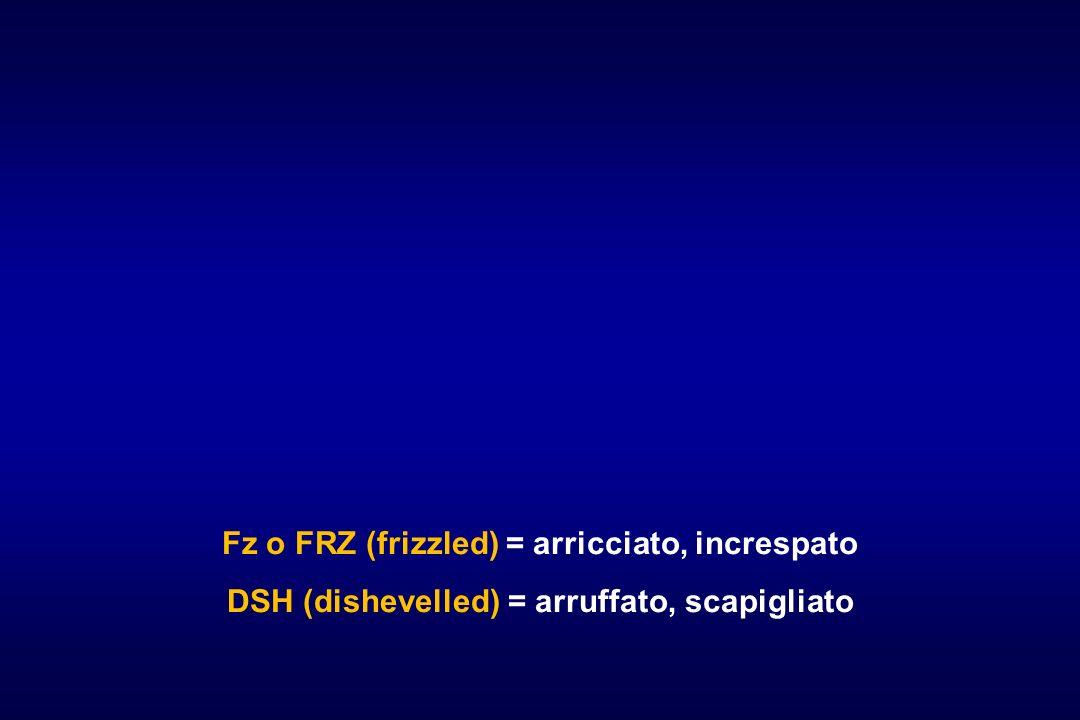 Fz o FRZ (frizzled) = arricciato, increspato