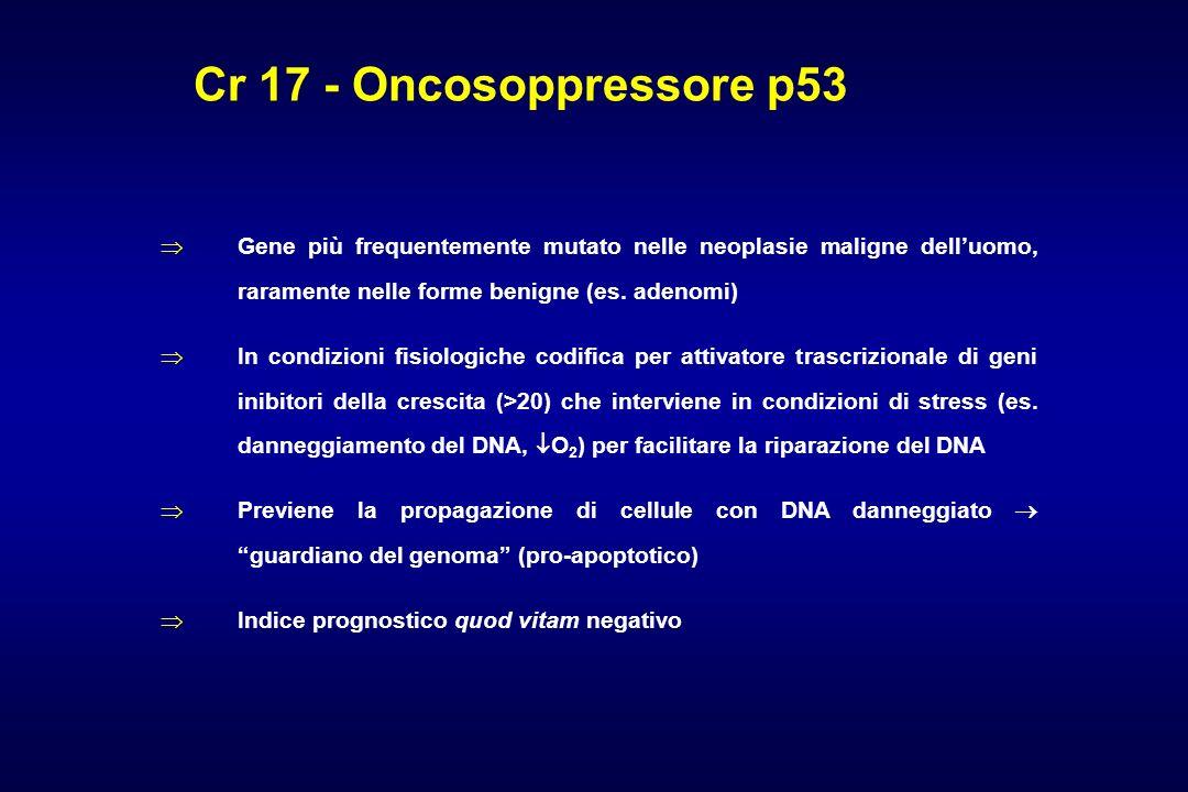 Cr 17 - Oncosoppressore p53Gene più frequentemente mutato nelle neoplasie maligne dell'uomo, raramente nelle forme benigne (es. adenomi)