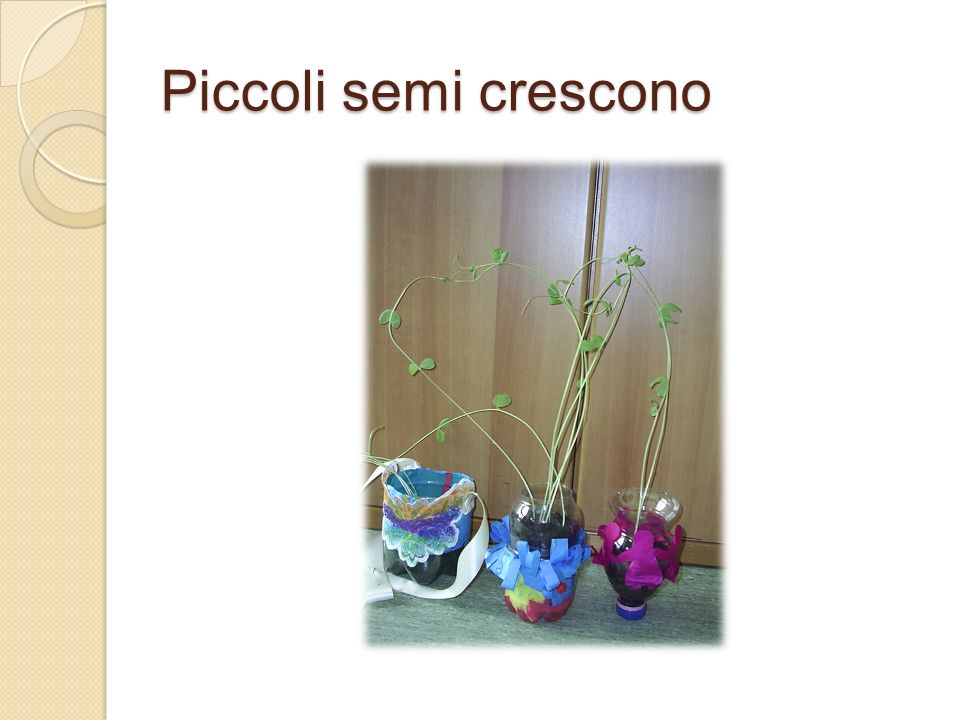 Piccoli semi crescono