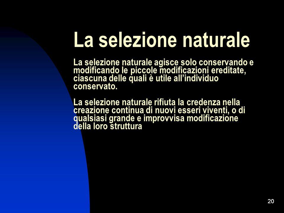 La selezione naturale La selezione naturale agisce solo conservando e modificando le piccole modificazioni ereditate, ciascuna delle quali è utile all'individuo conservato.