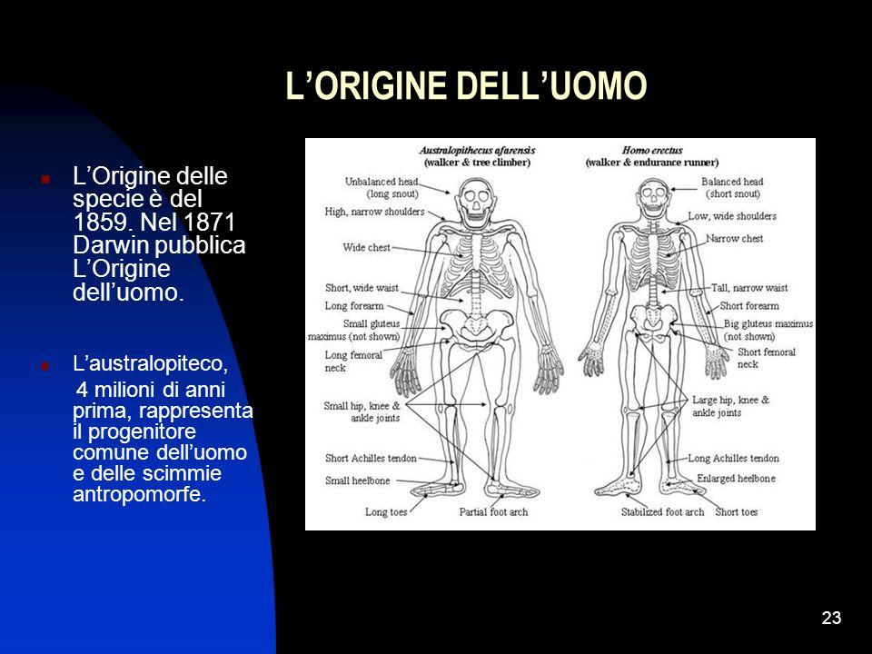 L'ORIGINE DELL'UOMO L'Origine delle specie è del 1859. Nel 1871 Darwin pubblica L'Origine dell'uomo.