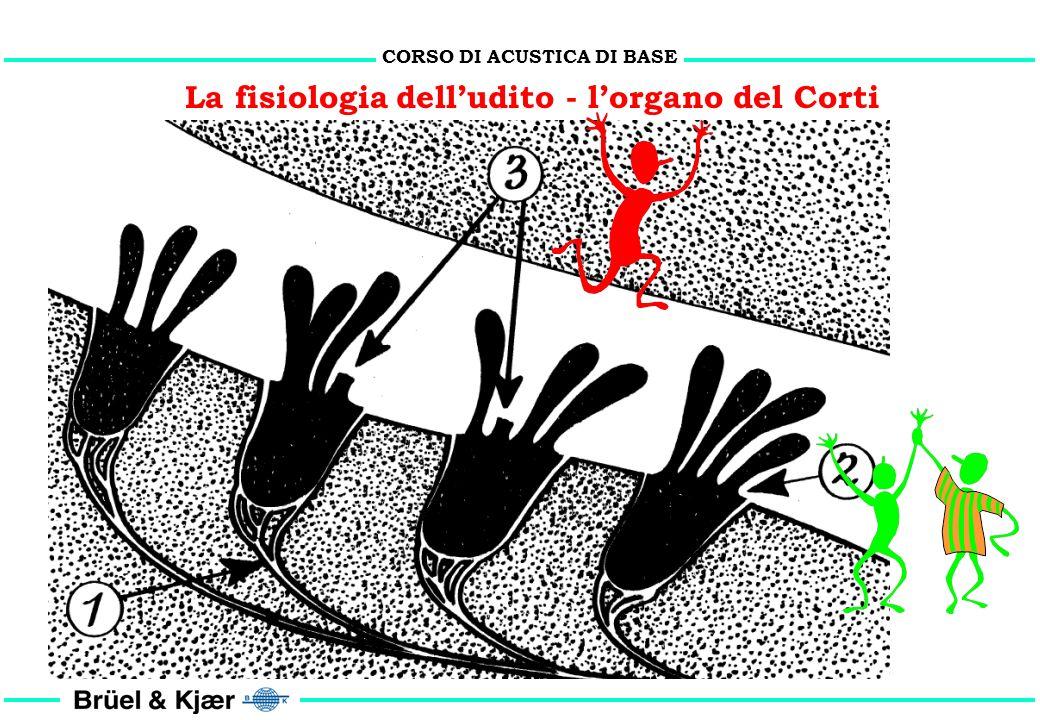 La fisiologia dell'udito - l'organo del Corti