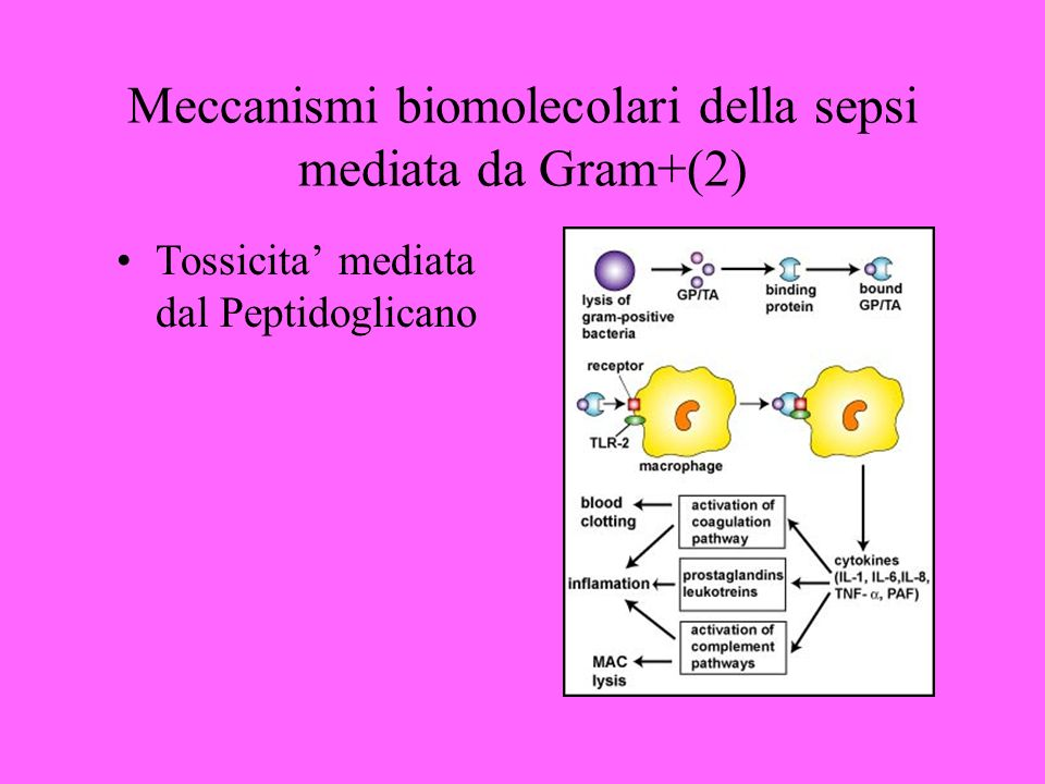 Meccanismi biomolecolari della sepsi mediata da Gram+(2)