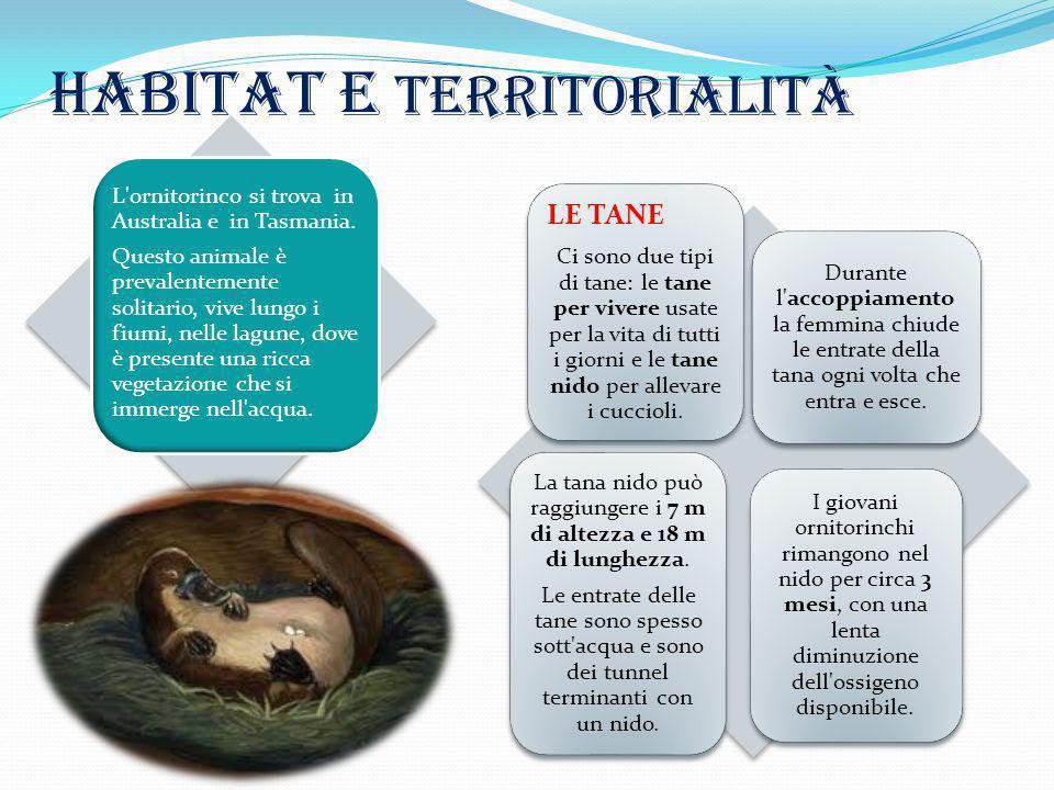 Habitat e territorialità