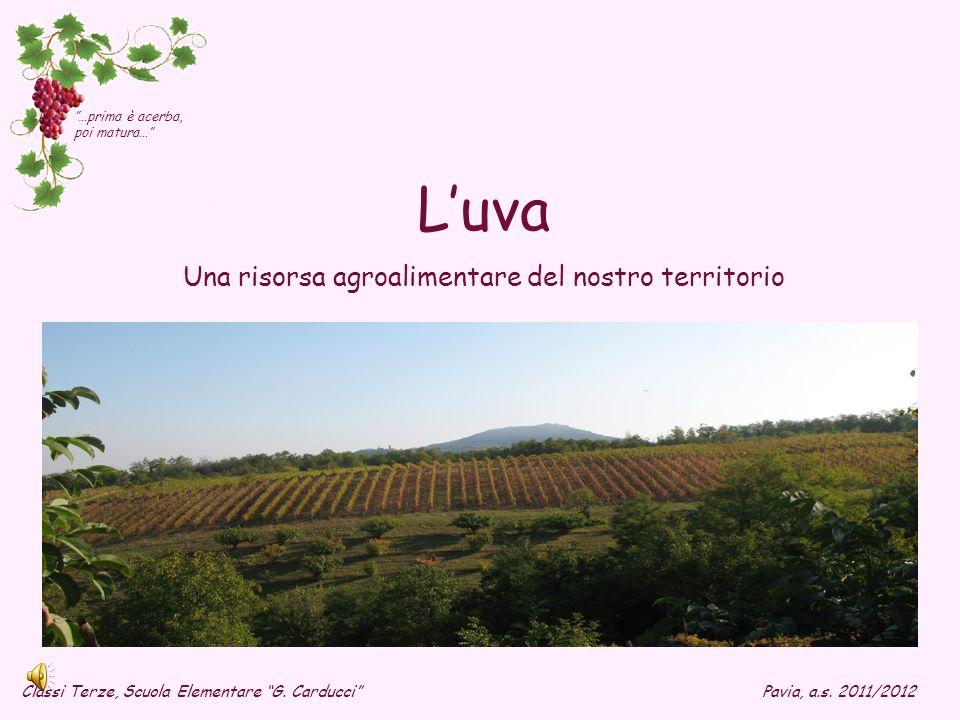 Una risorsa agroalimentare del nostro territorio