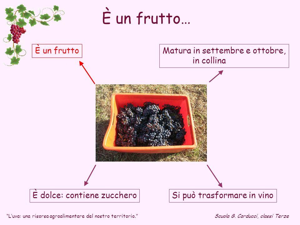 È un frutto… È un frutto Matura in settembre e ottobre, in collina