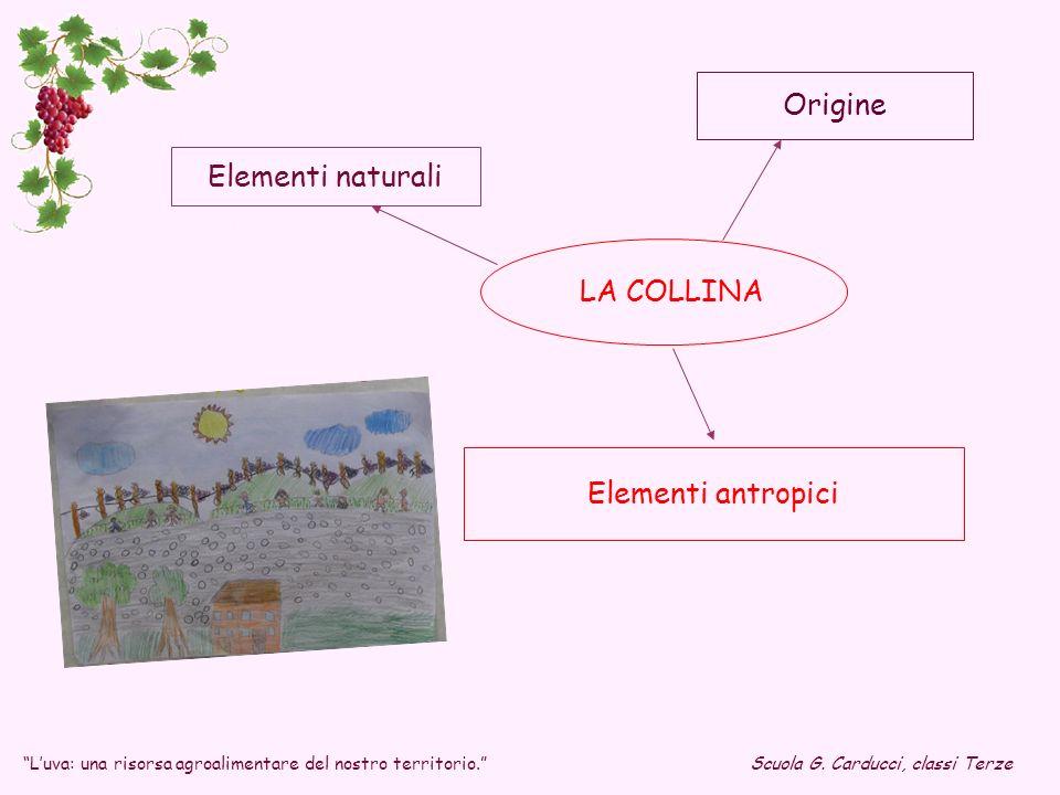 Origine Elementi naturali LA COLLINA Elementi antropici