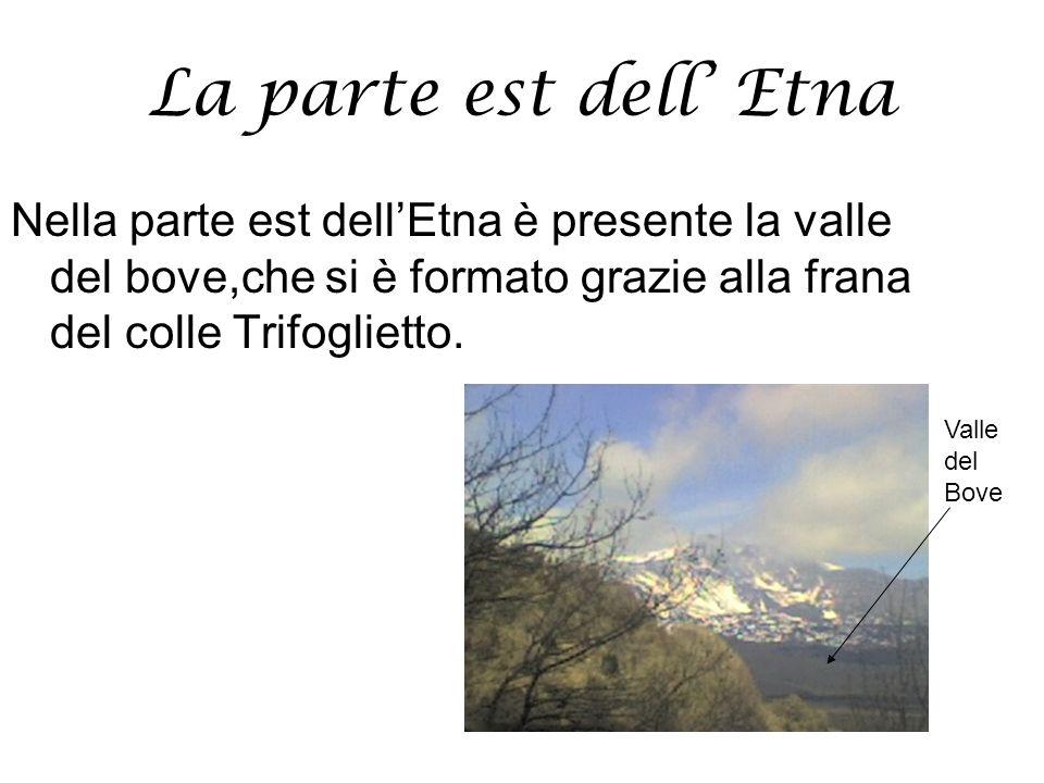 La parte est dell' Etna Nella parte est dell'Etna è presente la valle del bove,che si è formato grazie alla frana del colle Trifoglietto.