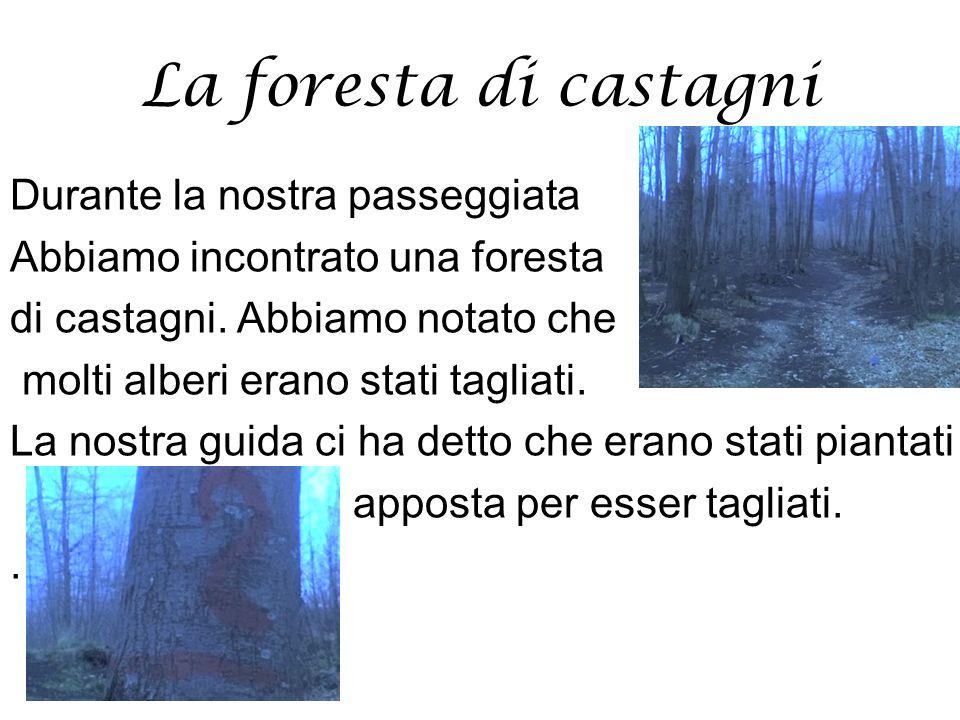 La foresta di castagni Durante la nostra passeggiata