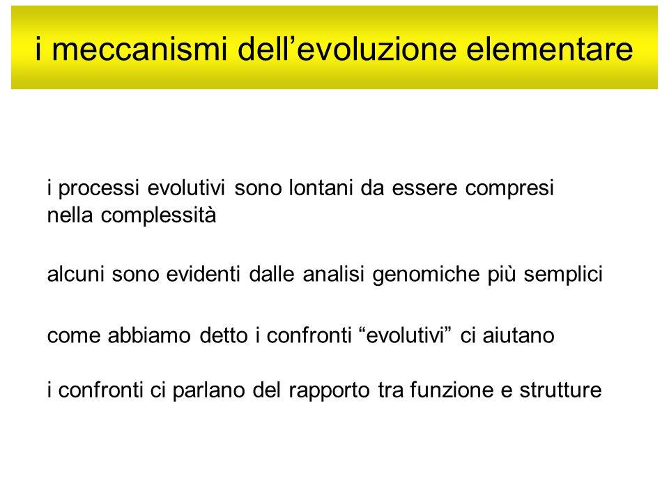 i meccanismi dell'evoluzione elementare