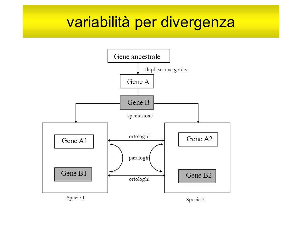 variabilità per divergenza