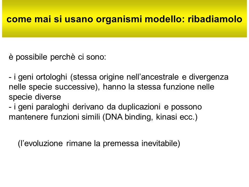 come mai si usano organismi modello: ribadiamolo