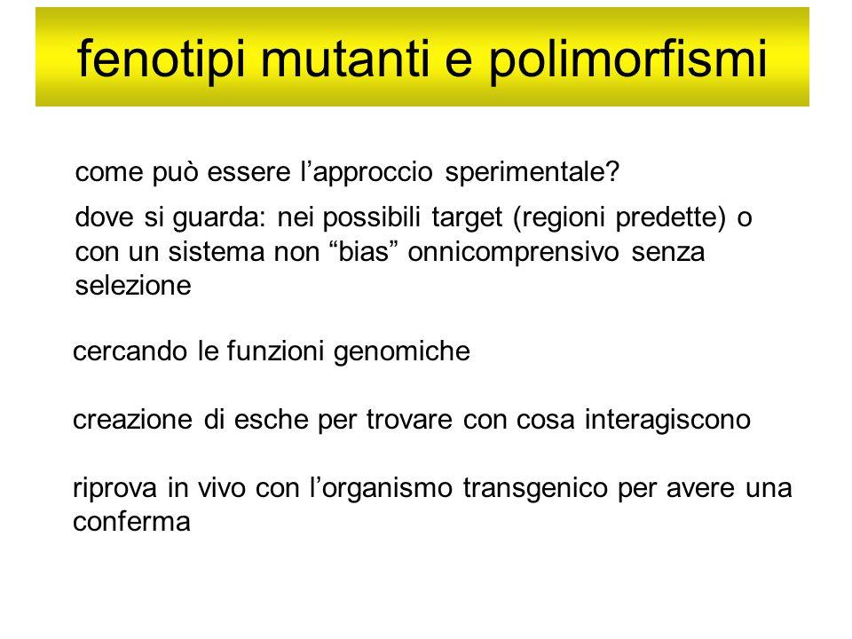 fenotipi mutanti e polimorfismi