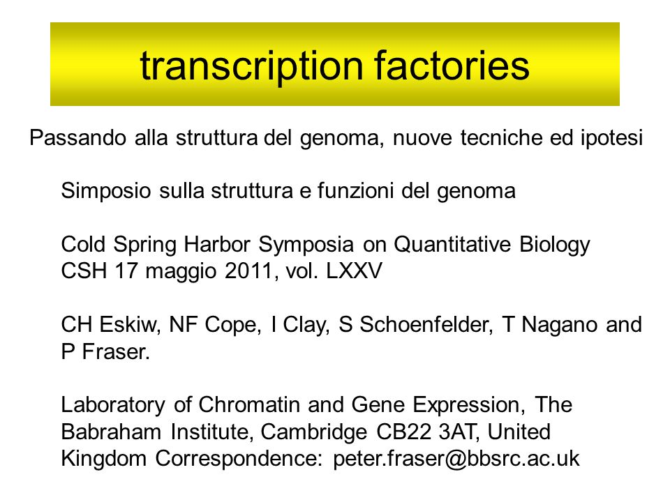 transcription factories