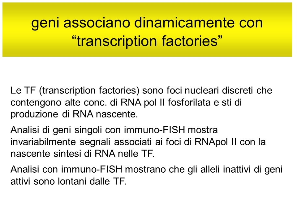 geni associano dinamicamente con transcription factories