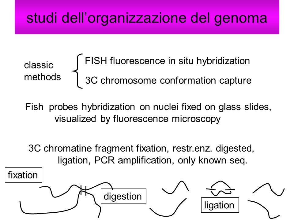 studi dell'organizzazione del genoma
