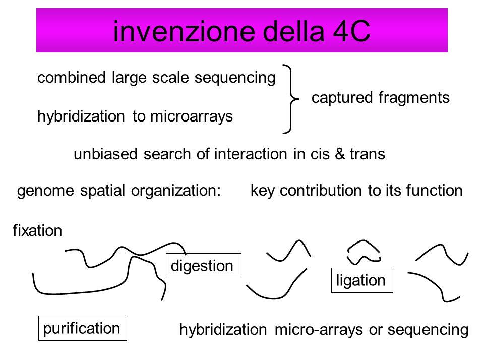 invenzione della 4C combined large scale sequencing