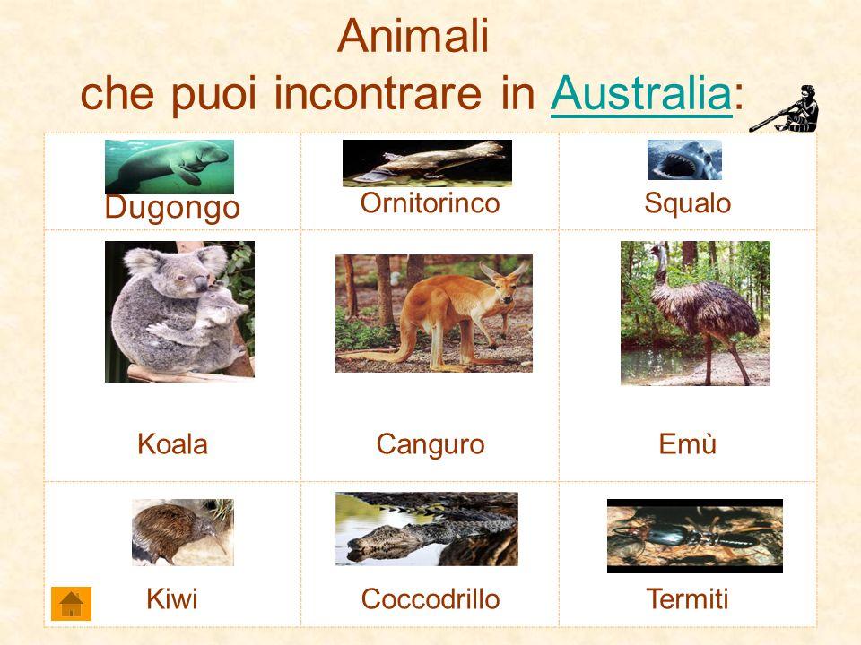Animali che puoi incontrare in Australia: